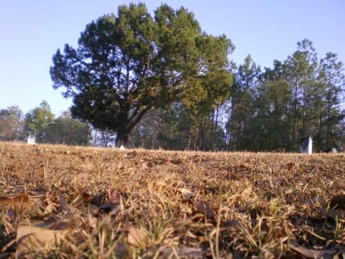 Irwinville GA Cemetery Old Cedar Tree Photograph Copyright Brian Brown Vanishing South Georgia USA 2008