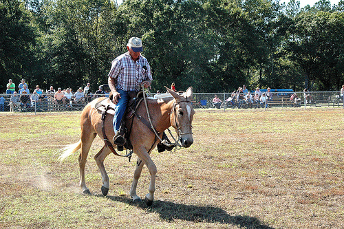 guysie ga mule roundup horseback riding photograph copyright brian brown vanishing south georgia usa 2010