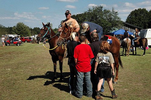 guysie mule roundup festival photograph copyright brian brown vanishing south georgia usa 2010