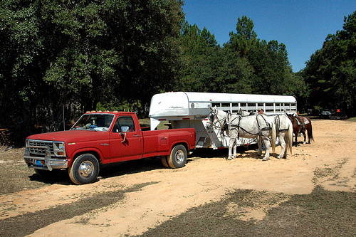 guysie mule roundup horse trailer photogrpah copyright brian brown vanishing south georgia usa 2010