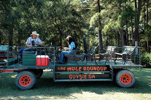 mule roundup guysie ga photograph copyright brian brown vanishing south georgia usa 2010