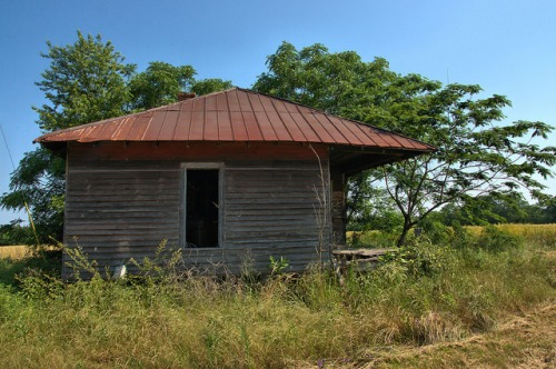 new era ga tenant house chinaberry tree photograph copyright brian brown vanishing south georgia usa 2009
