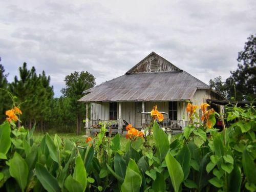 irwin county ga clements farmhouse canna lillies photograph copyright brian brown vanishing south georgia usa 2009
