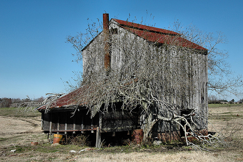 irwin county ga irwinville farms tobacco barn photograph copyright brian brown  vanishing south georgia usa 2009