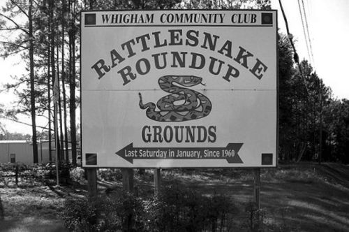 whigham ga rattlesnake roundup sign photograph copyright brian brown vanishing south georgia usa 2009