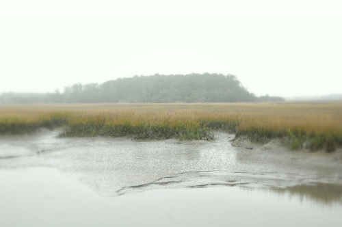 harris-neck-national-wildlife-refuge-mcintosh-county-ga-coastal-tidal-ecosystem-low-tide-autumn-december-foggy-photo-copyright-brian-brown-vanishing-south-georgia-usa-2009