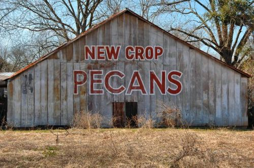 shellman ga pecan sign barn photograph copyright brian brown vanishing south georgia usa 2010