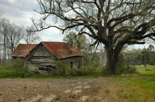 rowena ga farmhouse old oak photograph copyright brian brown vanishing south georgia usa 2010