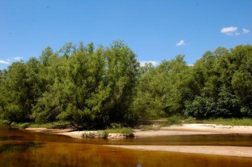 ohoopee river at tattnall county landing ga photograph copyright brian brown vanishing south georgia usa 2011