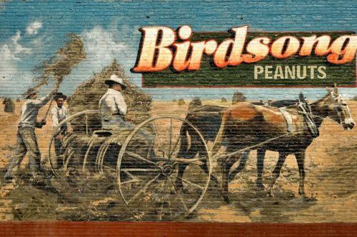 blakely ga birdsong peanuts mural photograph copyright brian brown vanishing south georgia usa 2010