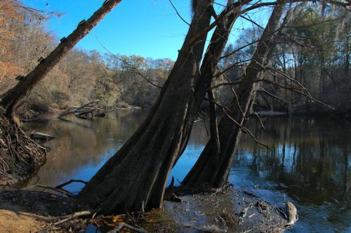 scarboro-landing-ogeechee-river-ga-photograph-copyright-brian-brown-vanishing-south-georgia-usa-2012