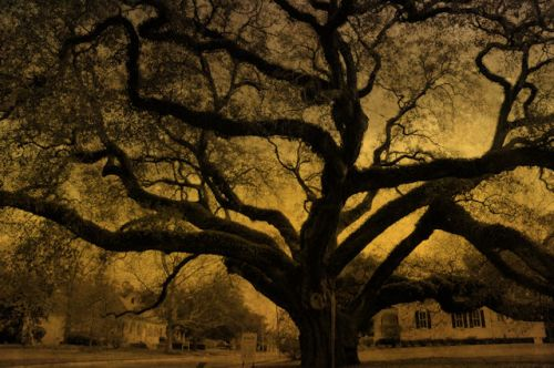 the-big-oak-thomasville-ga-landmark-photograph-copyright-brian-brown-vansihing-south-georgia-usa-2012