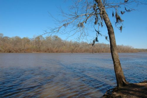 moody-forest-natural-area-altamaha-river-photograph-copyright-brian-brown-vanishing-south-georgia-usa-2012