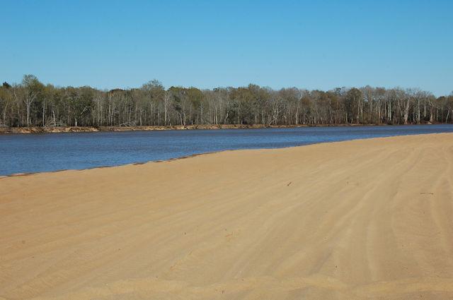 moody-forest-natural-area-appling-county-ga-altamaha-river-sandbar-photograph-copyright-brian-brown-vanishing-south-georgia-usa-2012