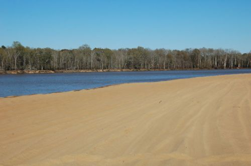 moody-forest-natural-area-appling-county-ga-altamaha-river-sandbar-photograph-copyright-brian-brown-vanishing-south-georgia-usa-2012