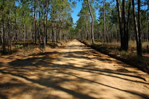 moody-forest-natural-area-dirt-road-photograph-copyright-brian-brown-vanishing-south-georgia-usa-2012