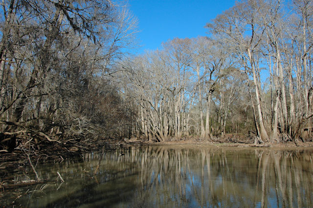 moody-forest-natural-area-wetland-photograph-copyright-brian-brown-vanishing-south-georgia-usa-2012