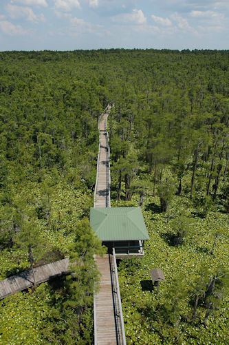 grand-bay-wma-aerial-view-from-kinderlou-tower-photograph-copyright-brian-brown-vanishing-south-georgia-usa-2012