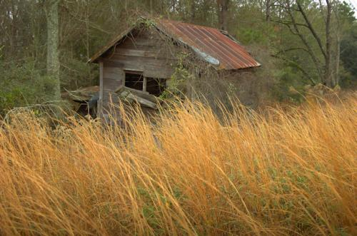 pine-grove-ga-collapsing-smokehouse-photograph-copyright-brian-brown-vanishing-south-georgia-usa-2012