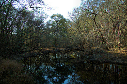Canoochee River GA Claxton Evans County Picture Image Photo © Brian Brown Vanishing South Georgia USA 2013
