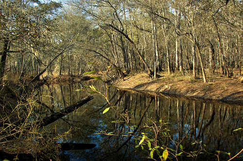 Canoochee River GA Claxton Evans County Winter Landscape Picture Image Photo © Brian Brown Vanishing South Georgia USA 2013