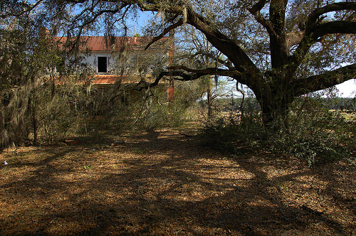 Kennedy Bridge Road Bulloch County GA Abandoned Farmhouse Cracker Vernacular I House Old Oak Tree Picture Image Photograph © Brian Brown Vanishing South Georgia USA 2013