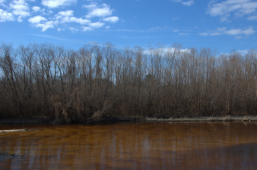 Ohoopee River GA Tattnall County Near Altamaha Confluence Big Hammock Picture Image Photo © Brian Brown Vanishing South Georgia USA 2013