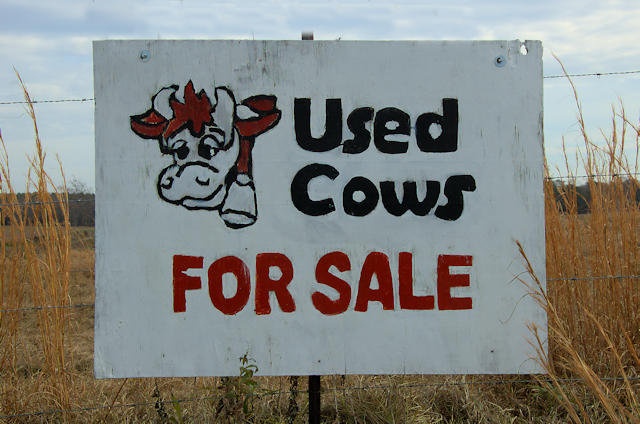 used-cows-for-sale-brooks-county-ga-photograph-copyright-brian-brown-vanishing-south-georgia-usa-2013