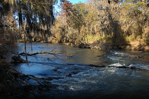 Ocmulgee River | Vanishing South Georgia Photographs by Brian Brown