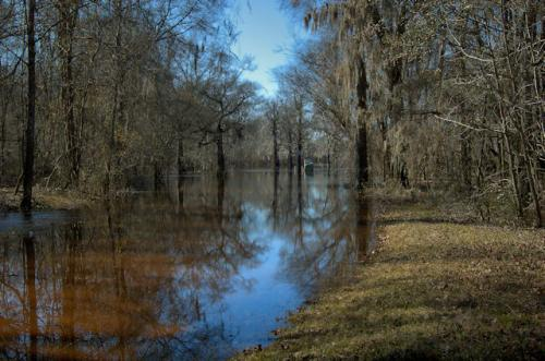 tattnall-county-landing-flooded-ohoopee-river-photograph-copyright-brian-brown-vansihing-south-georgia-usa-2013