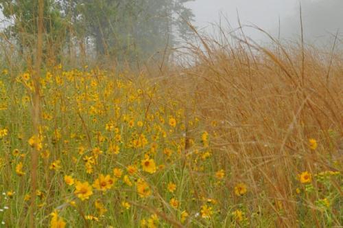 lands-crossing-ga-roadside-wildflowers-photograph-copyright-brian-brown-vansihing-south-georgia-usa-2013