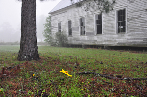 Young's Chapel Methodist Church Ben Hill County GA Foggy Spring Morning Wildflowers Coreopsis Pine Tree Endangered Landmark Picture Image Photograph © Brian Brown Vanishing South Georgia USA 2013