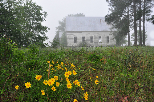 Young's Chapel Methodist Church Ben Hill County GA Foggy Spring Morning Wildflowers Coreopsis Pine Trees Endangered Landmark Picture Image Photograph © Brian Brown Vanishing South Georgia USA 2013