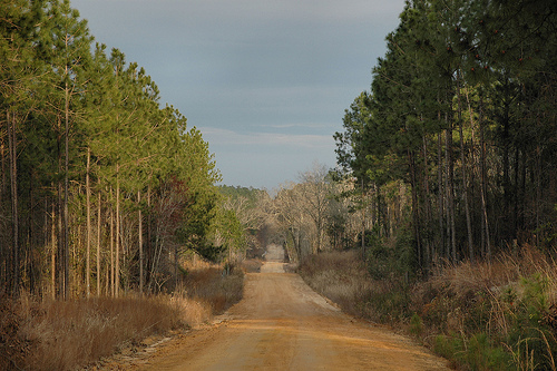 Dirt Road Ben Hill County GA Picture Image Photograph © Brian Brown Vanishing South Georgia 2010