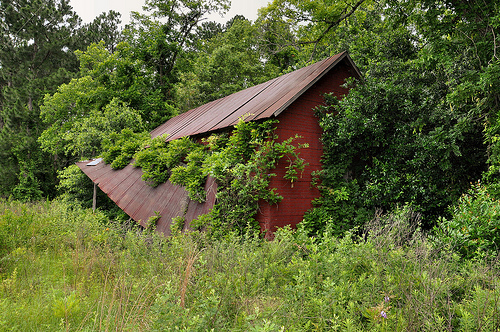 Rebecca GA Turner County Abandoned Red Tar Paper Tenant Farmhouse Fallen Front Porch Overgrown with Wisteria Picture Image Photograph © Brian Brown Vanishing South Georgia USA 2013