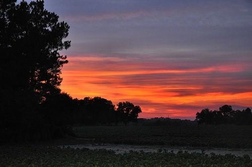 Sunset Irwin County GA Cotton Field Picture Image Photograph © Brian Brown Vanishing South Georgia USA 2013