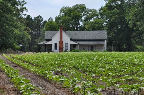 turner-county-ga-moore-farmhouse-photograph-copyright-brian-brown-vanishing-south-georgia-usa-2013