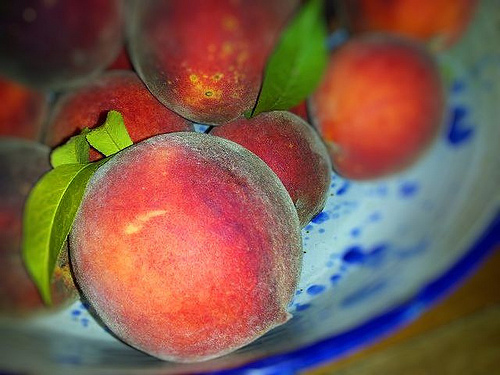 Organic Georgia Peaches Grown in Emanuel County at Red Earth Farms Tattnall County GA Sustainable Agriculture Picture Image Android Photograph © Brian Brown Vanishing South Georgia USA 2013