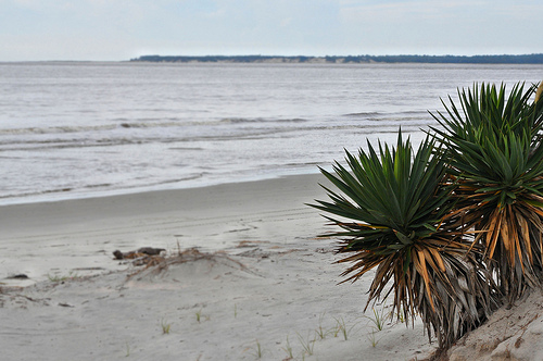 Glory Beach Jekyll Island GA Looking Toward Cumberland Island Sea Turtle Nesting Habitat Protected Sand Dunes South End Picture Image Photograph Copyright © Brian Brown Vanishing South Georgia USA 2013