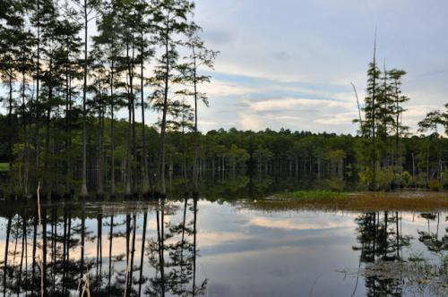 irwin-county-ga-bussell-mill-pond-photograph-copyright-brian-brown-vanishing-south-georgia-usa-2013