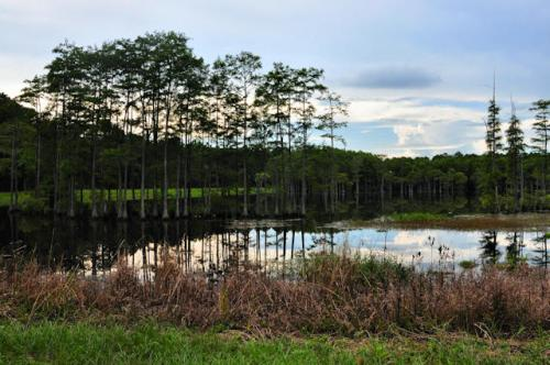 irwin-county-ga-bussell-pond-photograph-copyright-brian-brown-vanishing-south-georgia-usa-2013