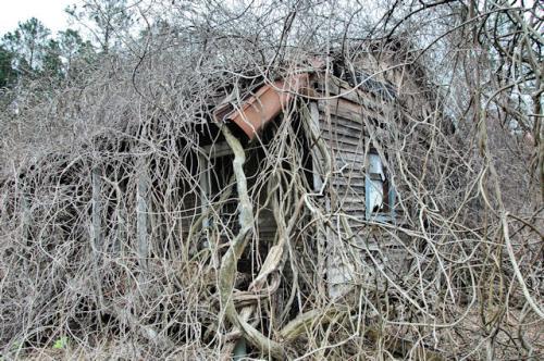 irwin-county-ga-tenant-house-major-mary-fuller-photograph-copyright-brian-brown-vanishing-south-georgia-usa-2013