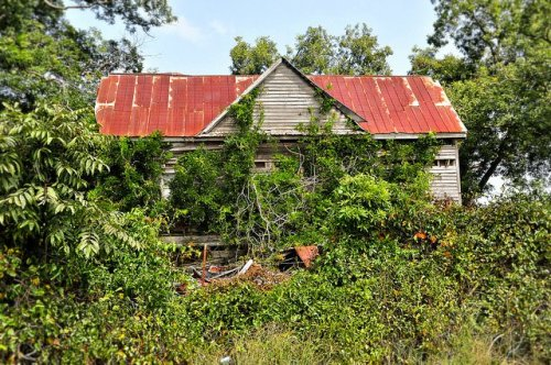 Sumter County GA Abandoned Farmhouse Vernacular Architecture Ruins Collapsed Front Porch Overgrown Picture Image Photograph Copyright © Brian Brown Vanishing South Georgia USA 2013