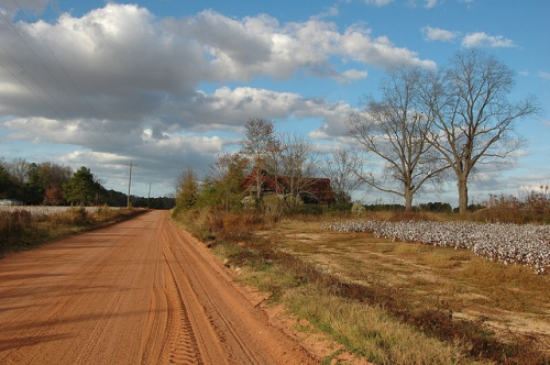 Old Farmhouse Dirt Road Cotton Field Mystic GA Picture Image Photograph Copyright © Brian Brown Vanishing South Georgia USA 2013