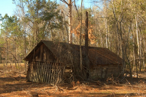 Abandoned Barn Ruins Wefanie GA Long County GA Photograph Copyright Brian Brown Vanishing South Georgia USA 2013