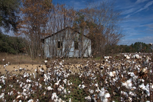 Abandoned Farm Building Cotton Fields Jenkins County GA Photograph Copyright Bria Brown Vanishing South Georgia USA 2013