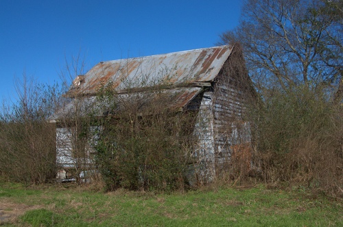 Ogeechee GA Screven County Ghost Town Cracker Cabin Overgrown Vegetation Pale Blue Clapboard Photograph Copyright Brian Brown Vanishing South Georgia USA 2014