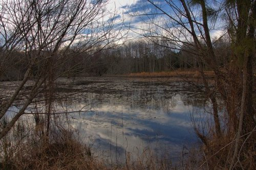 pond-ben-hill-county-ga-photograph-copyright-brian-brown-vanishing-south-georgia-usa-2014