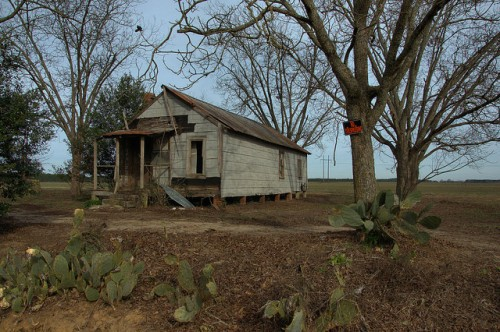 Tar Paper Shotgun House Prickly Pear Cactus Pecan Orchard Photograph Copyright Brian Brown Vanishing South Georgia USA 2014