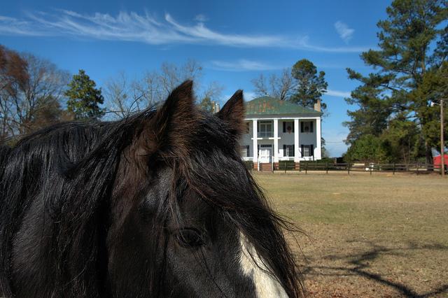Coley Farmhouse Inn Fritters Sajewinds Plantation Gypsy Vanner Horse Bleckley County GA Photograph Copyright Brian Brown Vanishing South Georgia USA 2014